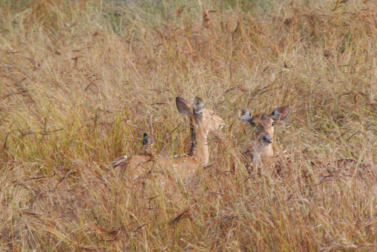 Random clicks - Pench Tiger Reserve