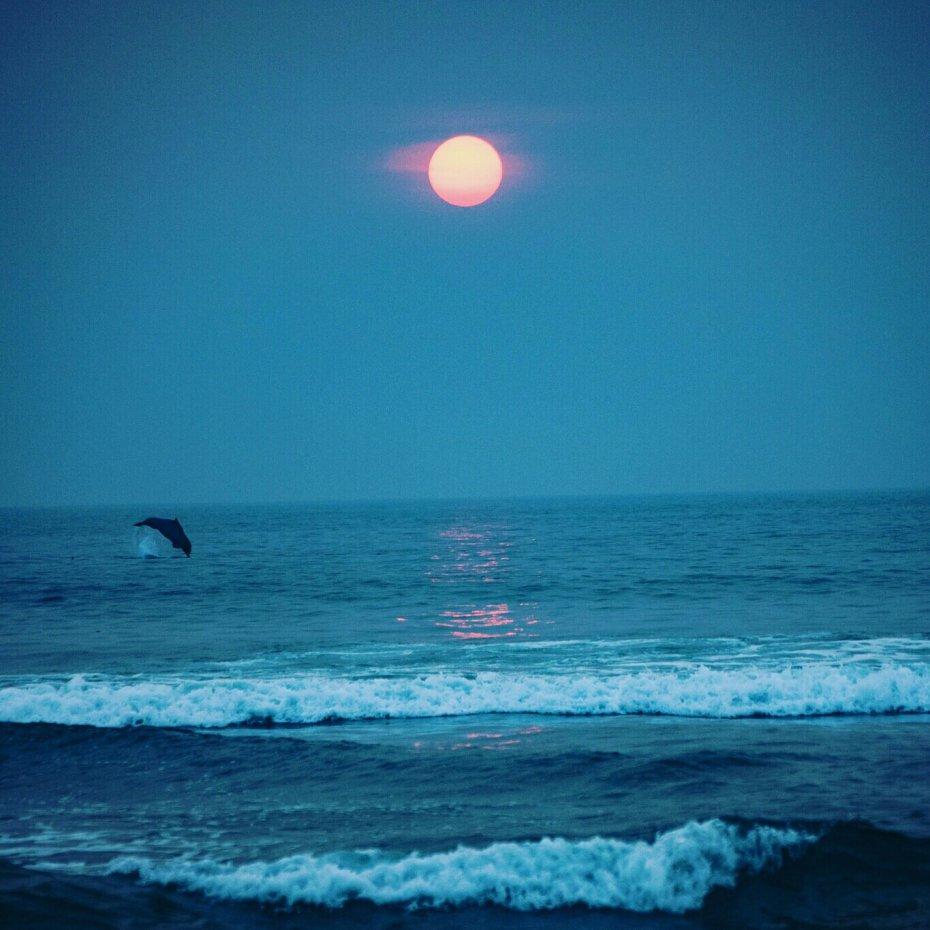 Agonda Dolphin Spotting